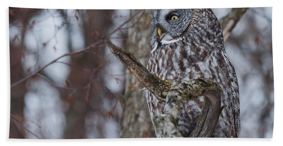 Owls Hand Towel featuring the photograph Over There by Cheryl Baxter