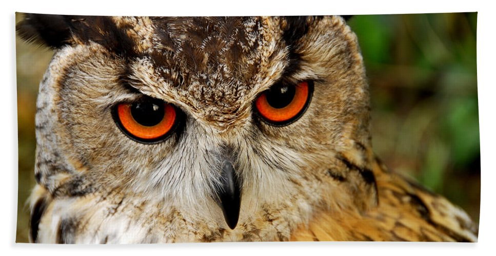 Adorable Hand Towel featuring the photograph Owl by TouTouke A Y