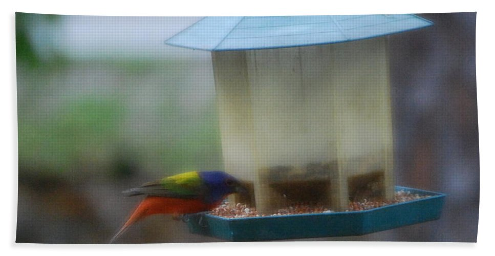 Feeding At My Bird Feeder Hand Towel featuring the photograph Painted Bunting by Robert Floyd