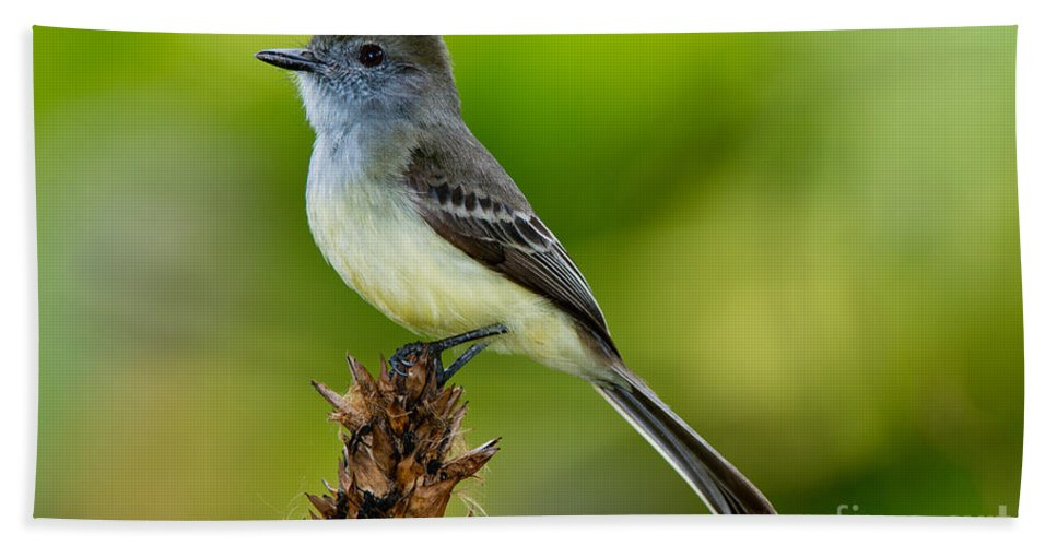 Pale-edged Flycatcher Hand Towel featuring the photograph Pale-edged Flycatcher by Anthony Mercieca