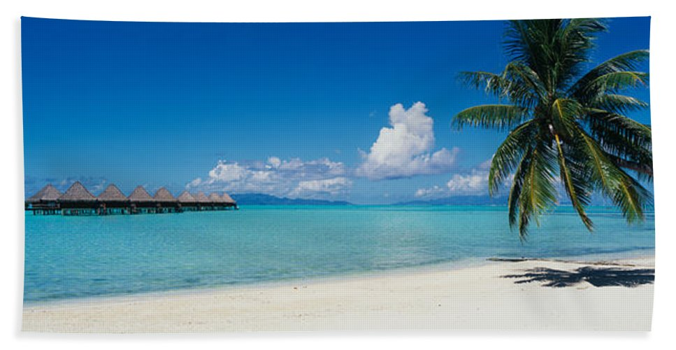 Photography Bath Towel featuring the photograph Palm Tree On The Beach, Moana Beach by Panoramic Images