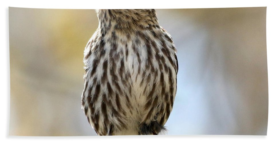 Pine Bath Sheet featuring the photograph Pine Siskin by Lori Tordsen