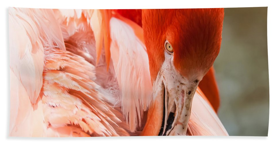 Flamingo Hand Towel featuring the photograph Pink Flamingo At A Zoo In Spring by Alex Grichenko