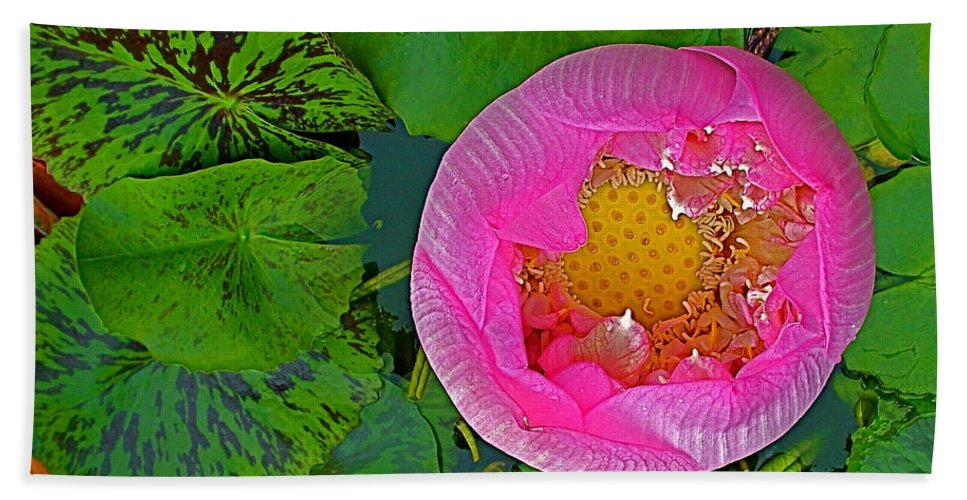 Pink Lotus In Backyard Of Home In Bangkok Bath Sheet featuring the photograph Pink Lotus In Backyard Of Home In Bangkok-thailand. by Ruth Hager