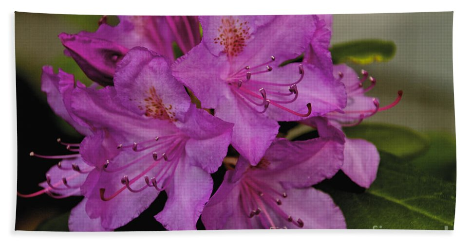 Flower Hand Towel featuring the photograph Pink Rhododendron by William Norton