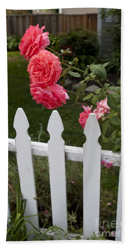 Pink Bath Sheet featuring the photograph Pink Roses White Picket Fence by Jason O Watson