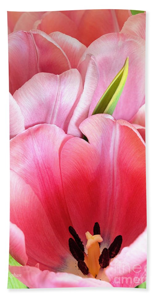 Tulips Pink Bath Sheet featuring the photograph Pink Tulip Trio by Regina Geoghan