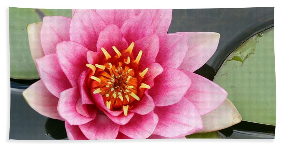 Lily Hand Towel featuring the photograph Pink Waterlily by Christiane Schulze Art And Photography