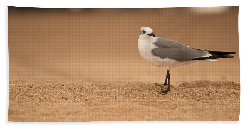 florida Sea Birds Bath Sheet featuring the photograph Posing by Paul Mangold