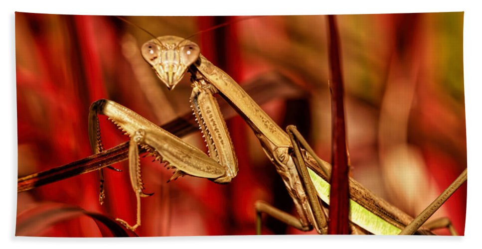 Preying Mantis Bath Sheet featuring the photograph Praying Mantis by Geraldine Scull
