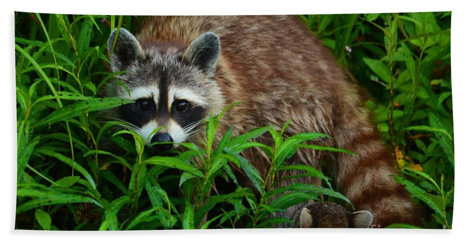 Raccoon Bath Sheet featuring the photograph Protective Mother by Deanna Cagle
