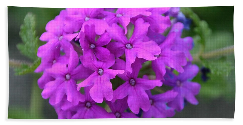 Flower Bath Sheet featuring the photograph Purely Purple by Susan Herber