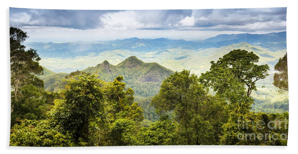 Forest Hand Towel featuring the photograph Queensland Rainforest by Tim Hester