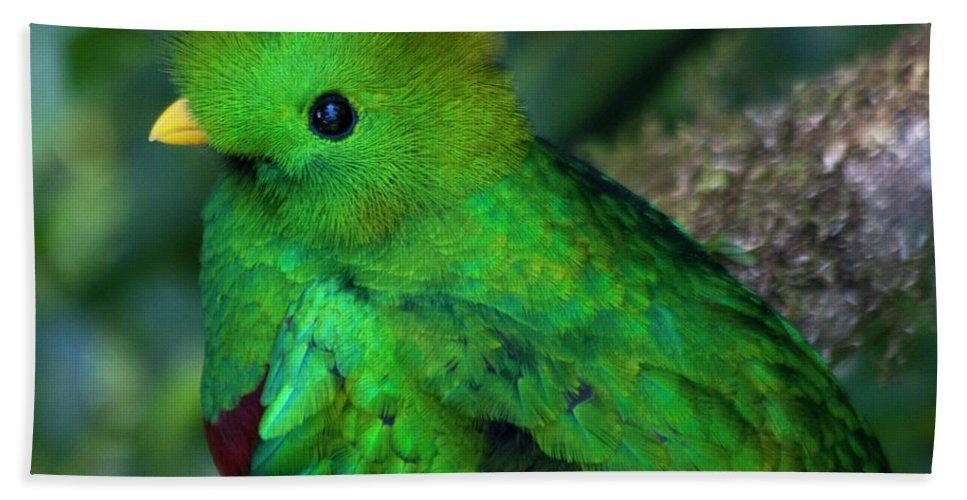 Bird Hand Towel featuring the photograph Quetzal by Heiko Koehrer-Wagner