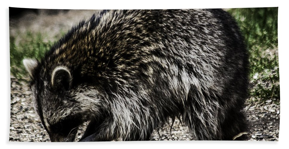 Raccoon Hand Towel featuring the photograph Raccoon by Ronald Grogan