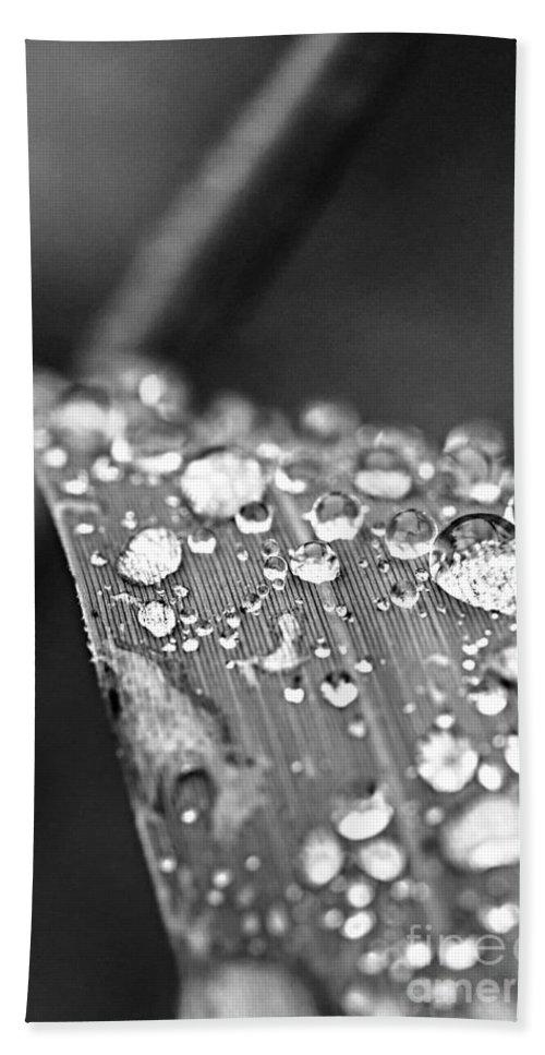 Grass Bath Sheet featuring the photograph Raindrops On Grass Blade by Elena Elisseeva