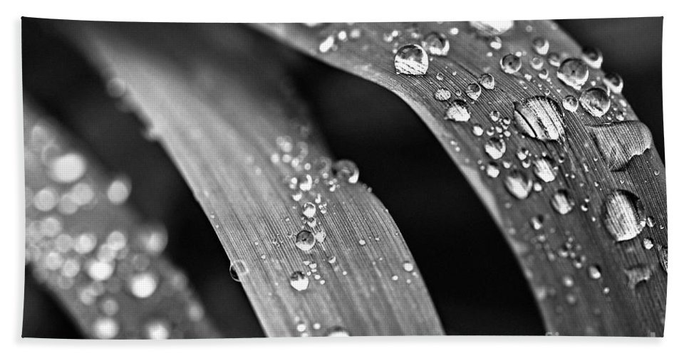 Grass Bath Sheet featuring the photograph Raindrops On Grass Blades by Elena Elisseeva