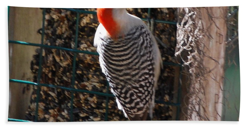 Feeding On Bird Seed Cake. Hand Towel featuring the photograph Red Bellied Woodpecker by Robert Floyd