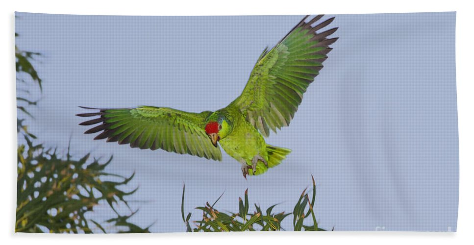 Red-crowned Parrot Hand Towel featuring the photograph Red-crowned Parrot by Anthony Mercieca