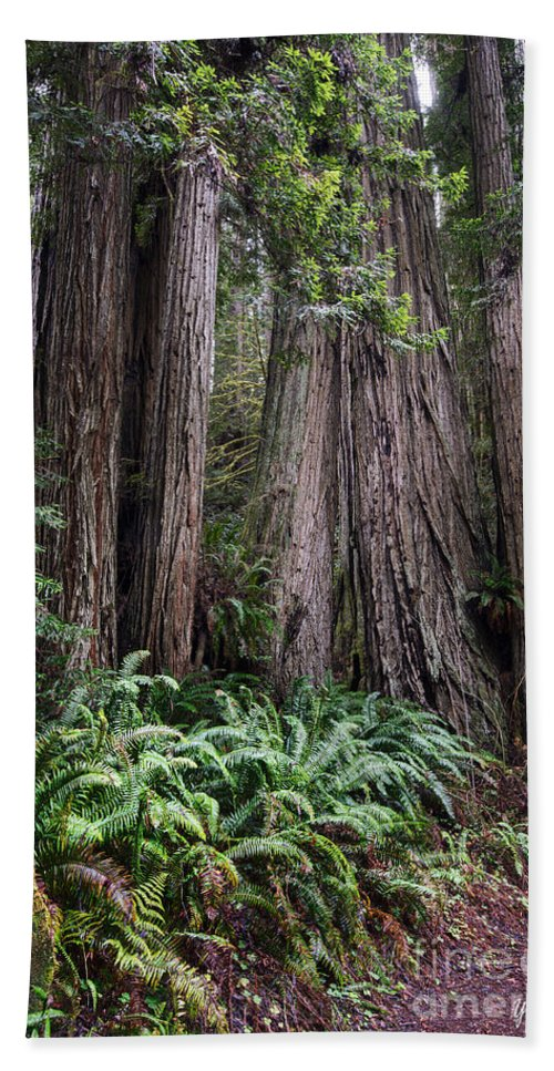 Redwood National Park Hand Towel featuring the photograph Redwood by Yefim Bam