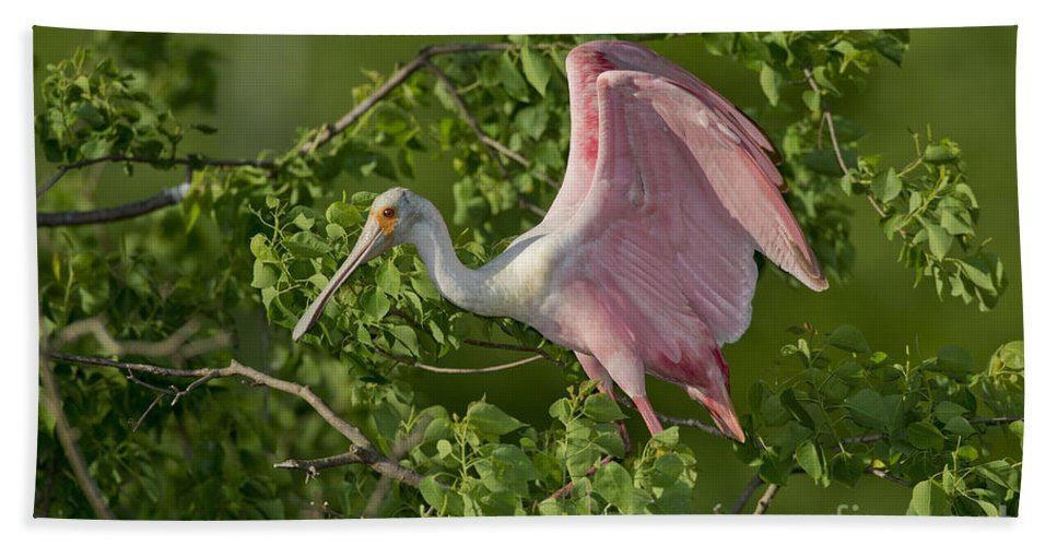 Roseate Spoonbill Hand Towel featuring the photograph Roseate Spoonbill by Anthony Mercieca