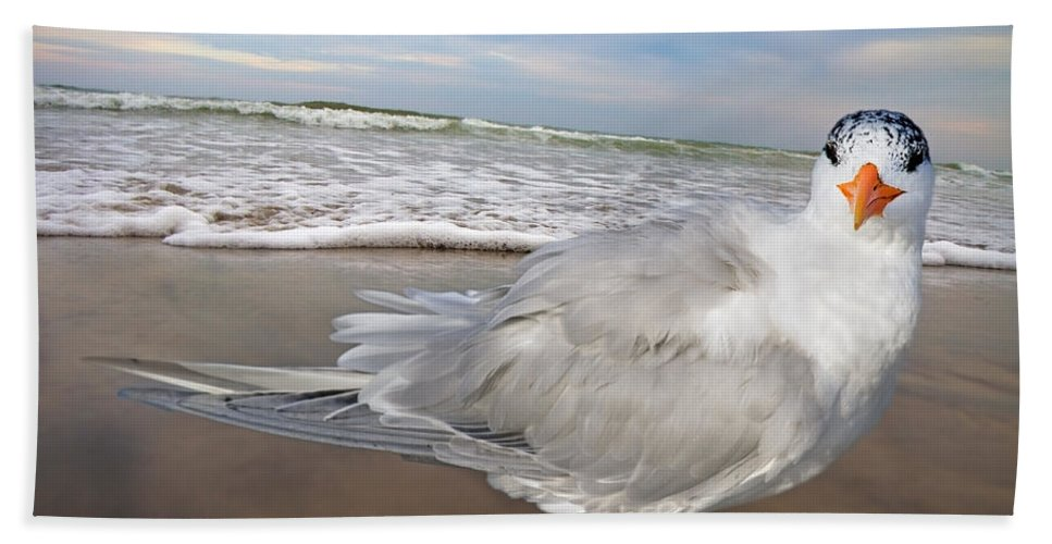 Royal Bath Sheet featuring the digital art Royal Tern by Betsy Knapp