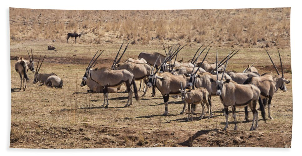 Oryx Bath Sheet featuring the photograph Safety In Numbers by Douglas Barnard