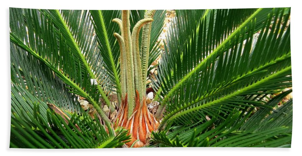 Sago Palm Hand Towel featuring the photograph Sago Palm by Zina Stromberg