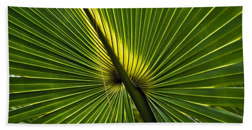 America Hand Towel featuring the photograph Saw Palmetto by Howard Stapleton