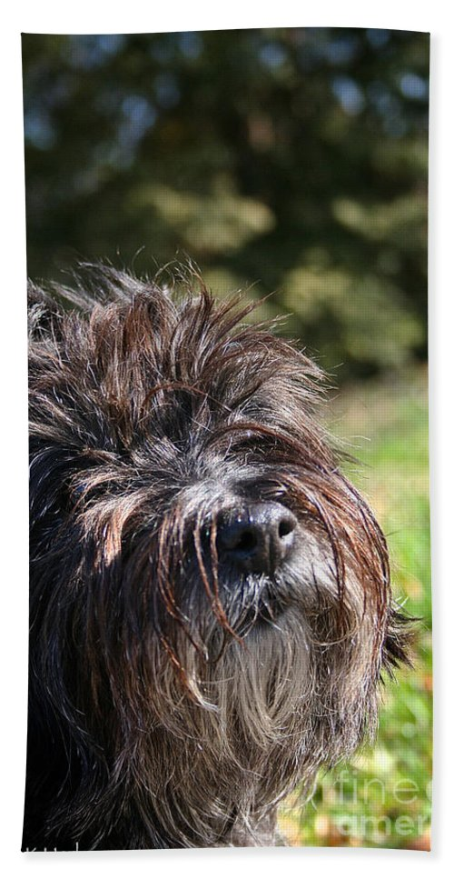 Dog Hand Towel featuring the photograph Scruffy by Susan Herber