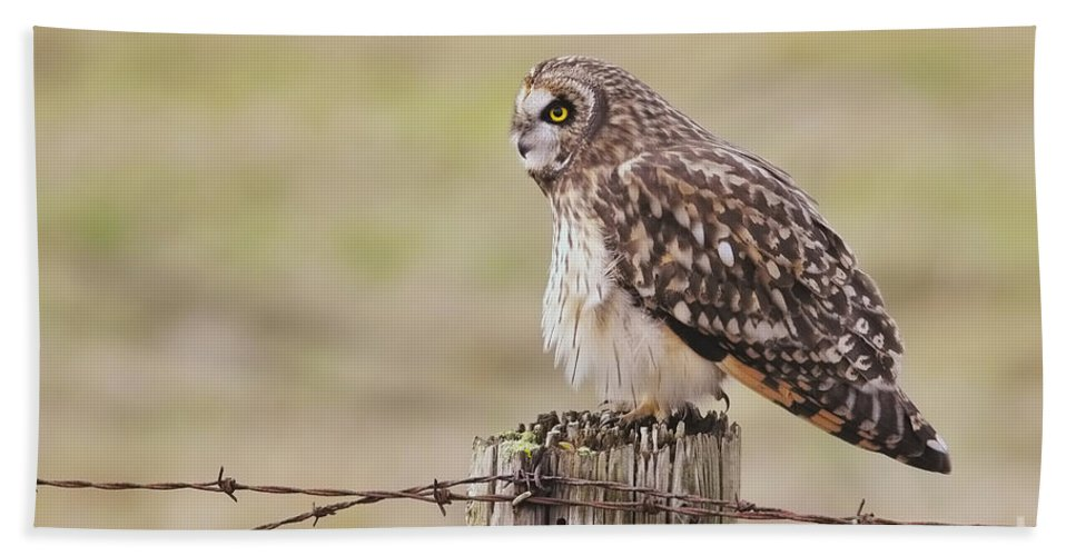Short Eared Owl Hand Towel featuring the photograph Short Eared Owl by Sharon Talson