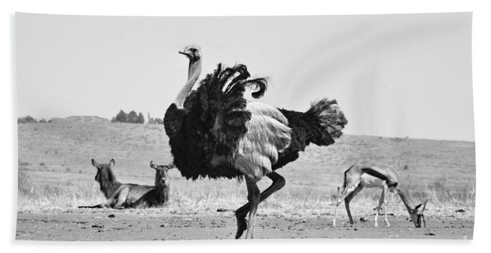 Ostrich Hand Towel featuring the photograph Show-off by Douglas Barnard