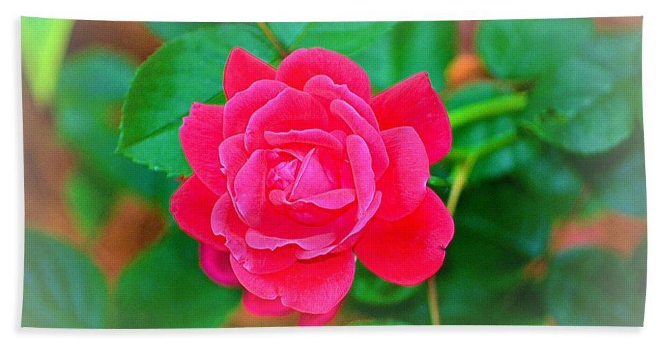 Rose Bath Sheet featuring the photograph Single Rose by Tara Potts