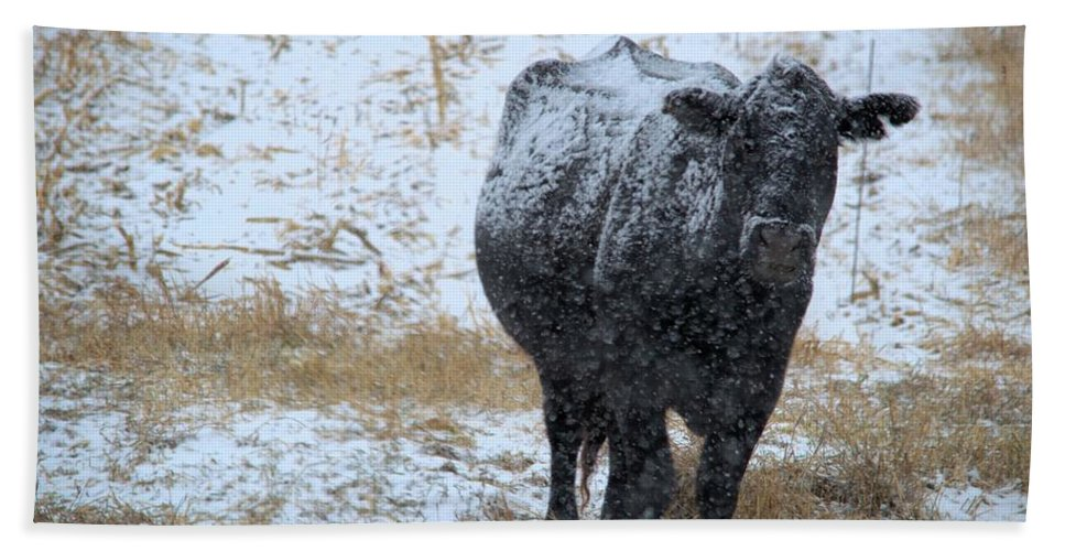 Angus Hand Towel featuring the photograph Snow Angus by Bonfire Photography