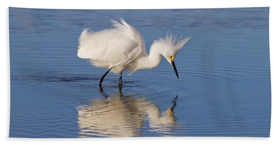 Egret Hand Towel featuring the photograph Snowy Egret by Kim Hojnacki