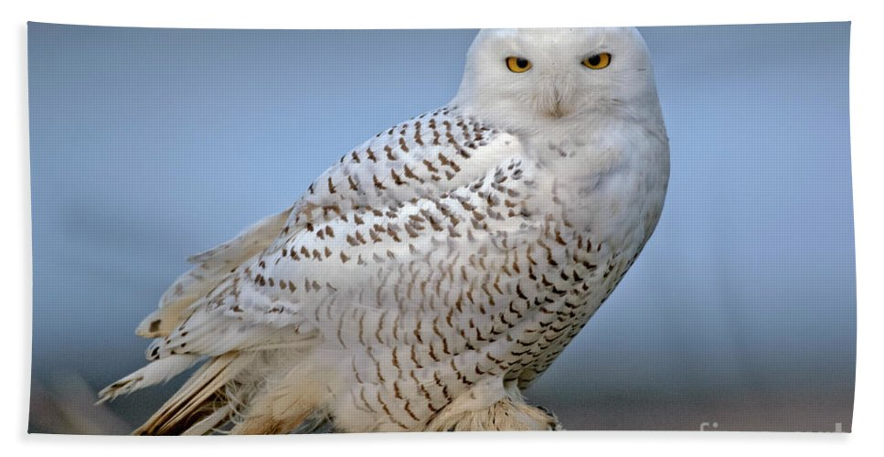 Bird Hand Towel featuring the photograph Snowy Owl by Anthony Mercieca