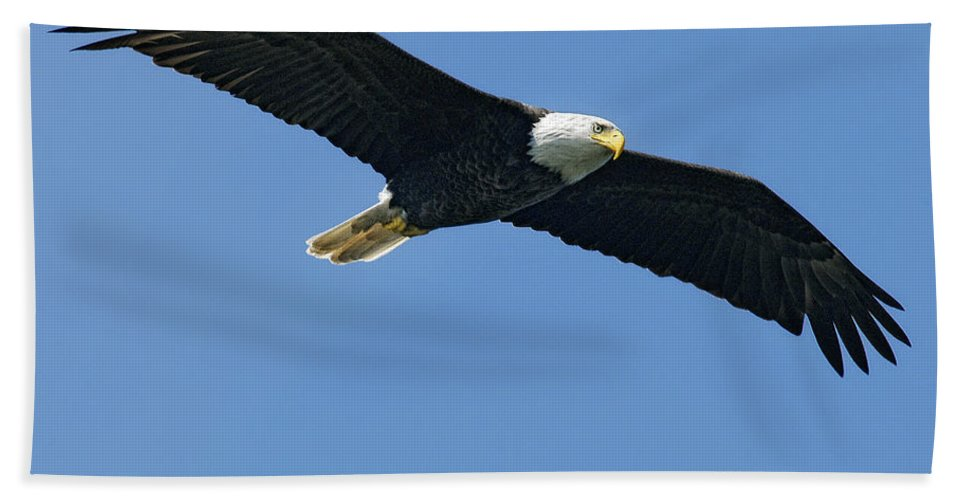 Eagles Hand Towel featuring the photograph Soaring by Claudia Kuhn