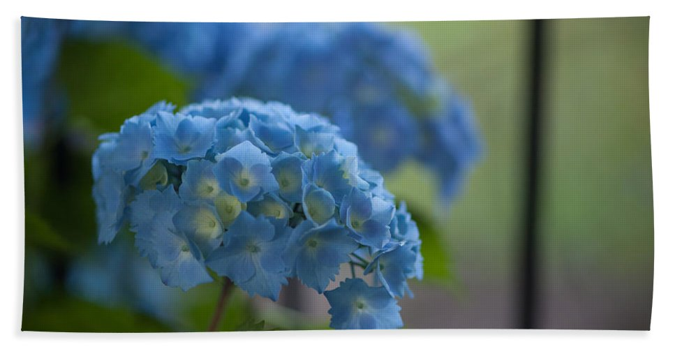 Hydrangea Bath Towel featuring the photograph Soft Blue Hydrangea by Mike Reid