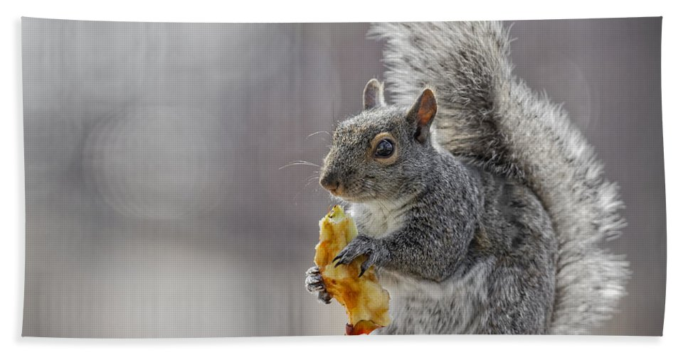 Adorable Hand Towel featuring the photograph Squirrel by Peter Lakomy
