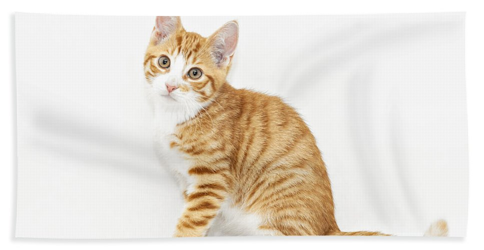 Kitten Bath Sheet featuring the photograph Stripy Red Kitten Sitting Down by Sophie McAulay