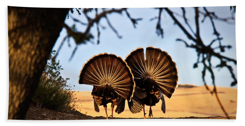 Turkey Hand Towel featuring the photograph Strutten Their Stuff by Beth Sargent