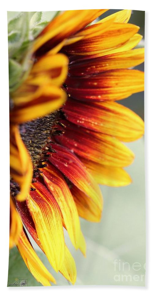 Mccombie Bath Towel featuring the photograph Sunflower Named The Joker by J McCombie