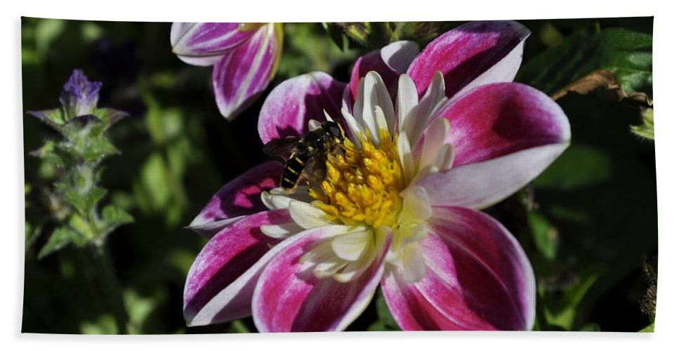Bee Bath Sheet featuring the photograph Sweet Nectar by Cathy Mahnke