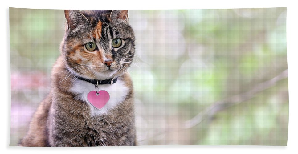 Cat Hand Towel featuring the photograph Tabby Cat by Paul Fell