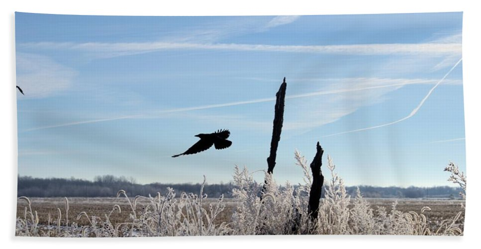 Crow Hand Towel featuring the photograph The Crow by Bonfire Photography