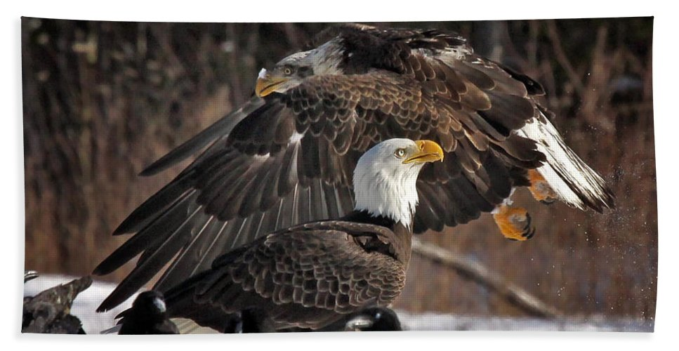 Maine Wildlife Hand Towel featuring the photograph The Fly By by Sharon Fiedler