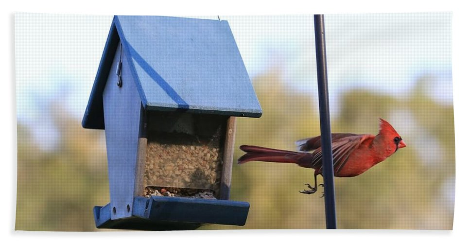 Cardinal Bath Sheet featuring the photograph The Great Escape by Carol Groenen