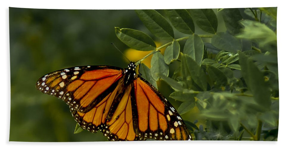 Butterflies Hand Towel featuring the photograph The Monarch by Ernie Echols