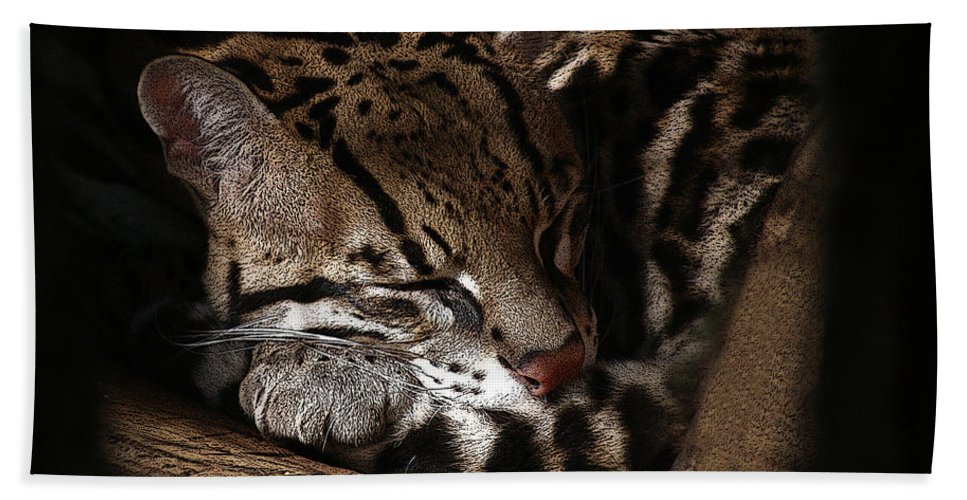 Animals Hand Towel featuring the photograph The Ocelot by Ernie Echols