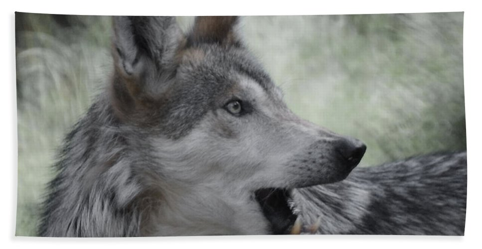 Wolf Bath Sheet featuring the photograph The Wolf 4 by Ernie Echols